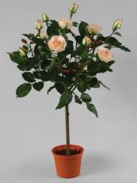 Роза в кашпо 65см кремово-розовая