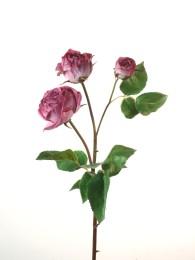 Роза Эквадор лиловая 48см