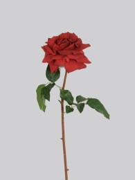Роза Вестминстер 52см