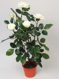 Роза в кашпо