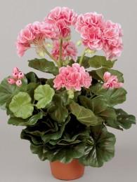 Пеларгония в кашпо розово-кремовая