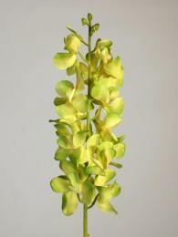 Ванда орхидея салатная