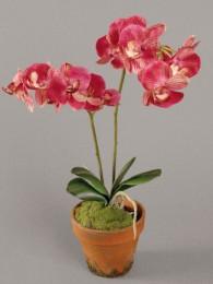 Орхидея в кашпо красная