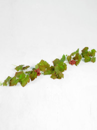 Виноград 120см