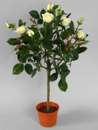 Роза в кашпо 65см кремовая