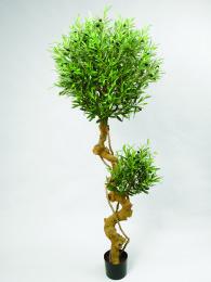 Дерево оливковое