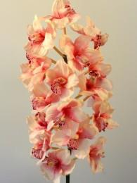 Сумбидиум розовый 120 см
