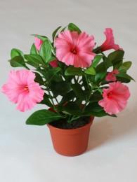 Петуния розово-персиковая