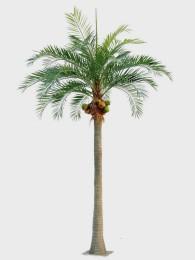 Пальма 590см
