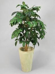 Кофейное дерево 140 см