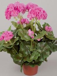 Пеларгония в кашпо розовая