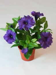 Петуния пурпурная