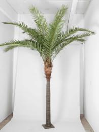 Финиковая пальма 450 см