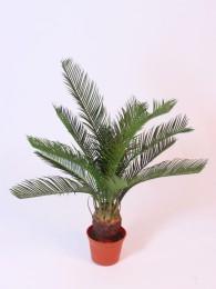Пальма в кашпо