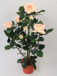 Куст розы в кашпо 60см