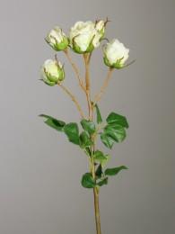 Роза кустовая кремовая 48см