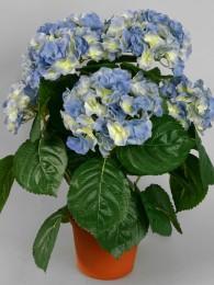 Гидрангея в кашпо синяя