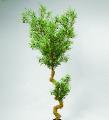 Дерево оливковое 210 см