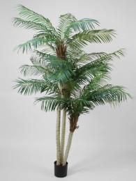 Финиковая пальма 230 см