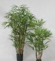 Бамбук Рафис 185 см