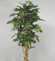 Кофейное дерево 150 см