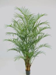 Пальма Арека 230см