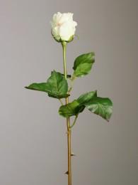 Роза кремовая 50см
