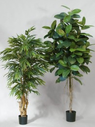 Каучуковое дерево 200 см