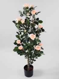 Куст розы в кашпо 120см
