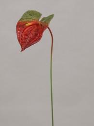 Антуриум красно-зеленый 75 см