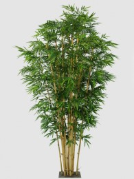 Бамбук 360см