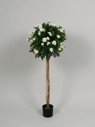Роза в кашпо кремовая 80см
