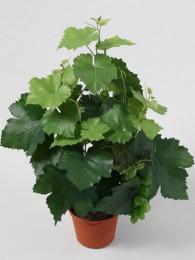 Куст винограда в кашпо 42 см