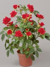 Роза в кашпо красная