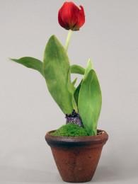 Тюльпан в кашпо