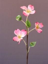 Кизил розовый
