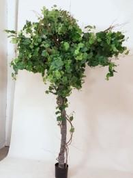 Дерево виноградное