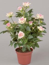 Роза в кашпо розово-кремовая