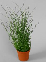 Трава в кашпо
