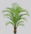 Пальма Арека 180 см