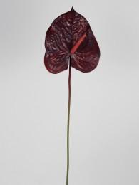 Антуриум бордовый 75 см