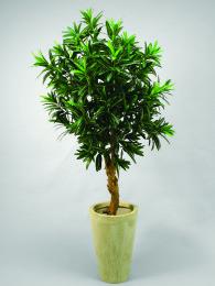 Дерево кротон 120 см