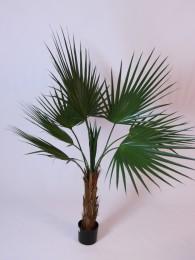 Пальма Вашингтон 150см
