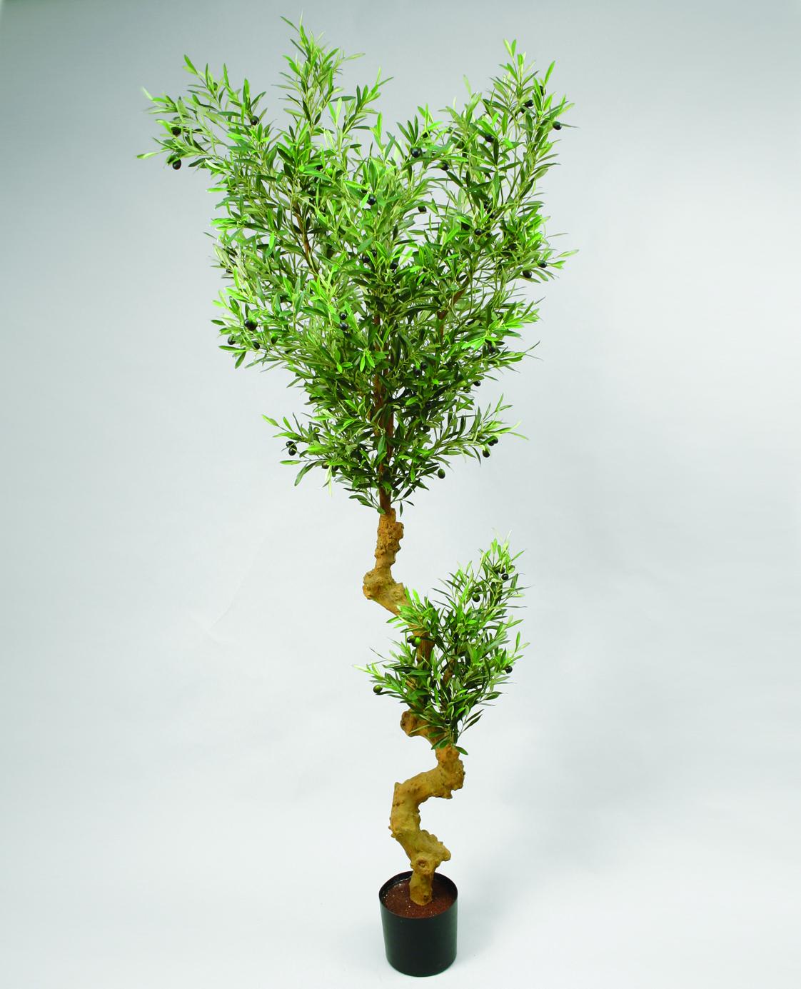 Дерево оливковое 210 см в интернете магазине Санкт-Петербурге