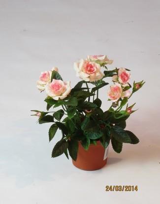 Роза в кашпо кремово-розовая 16 см